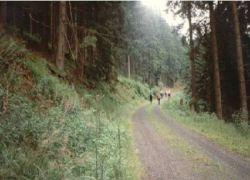 Harzwanderung_1